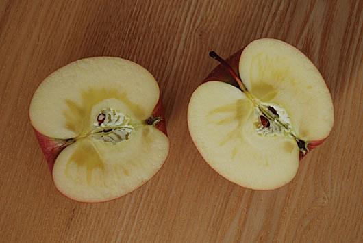 山形県産サンふじりんご