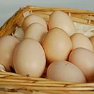有精卵烏骨鶏卵 1箱10個入